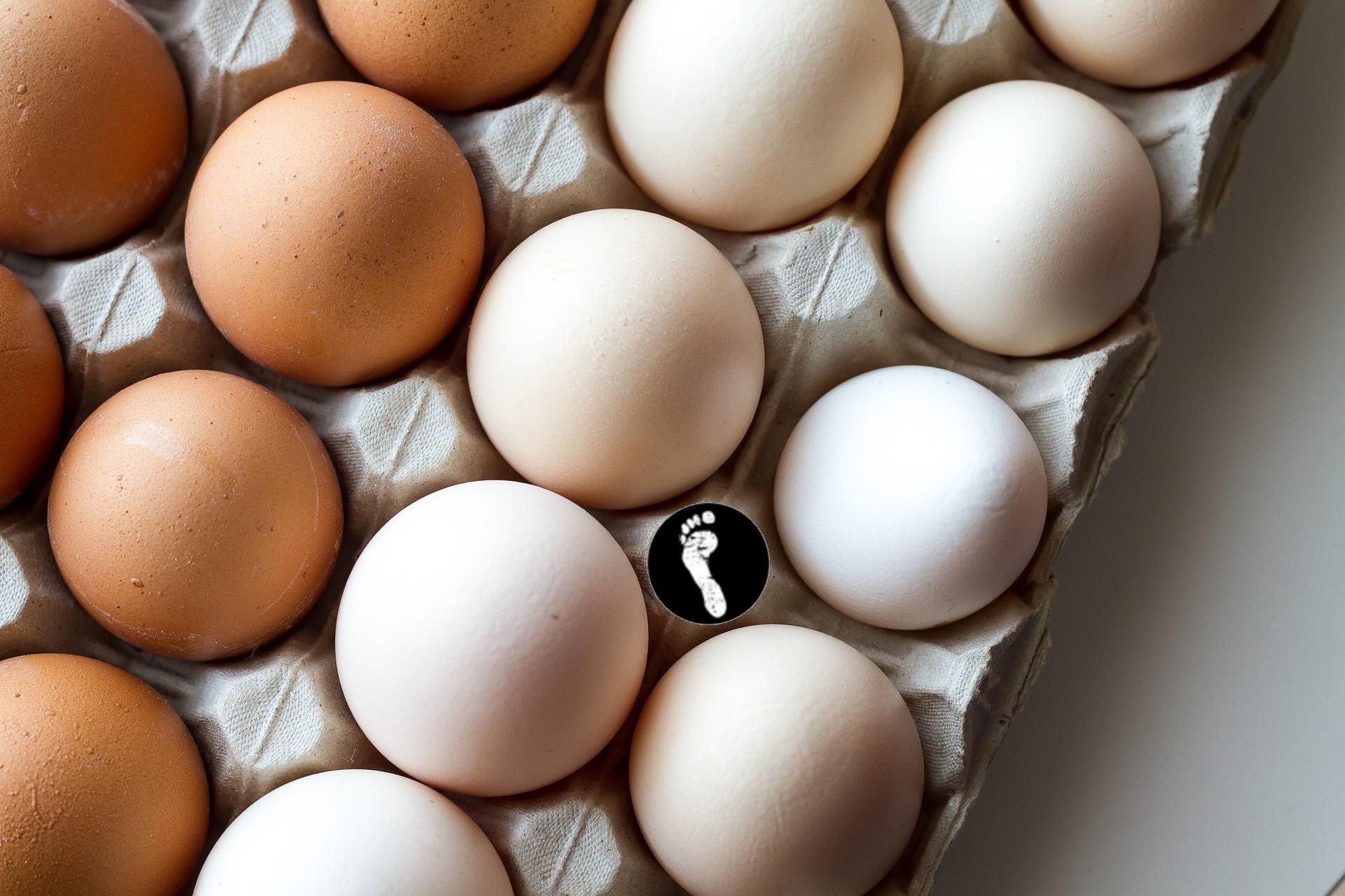 Beitragsbild: Eier! Wir brauchen Eier!